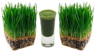 picture of wheatgrass shot